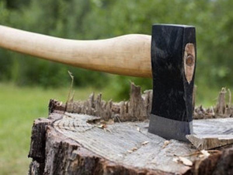 В Шатое зафиксирован факт незаконной рубки лесных насаждений