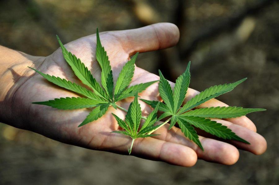 В городе Аргун выявлен факт незаконного хранения наркотиков