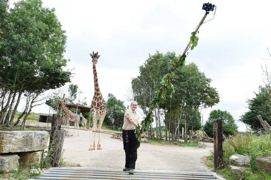 В британском зоопарке изобрели селфи-палку для фото с жирафами