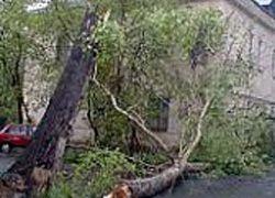 На Кубани от ночного урагана пострадали восемь населенных пунктов Новокубанского района