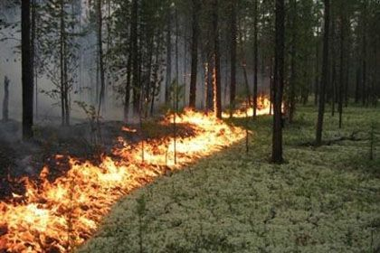 На фото: Лесной пожар