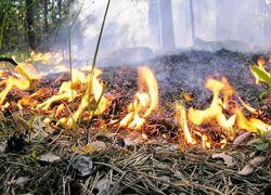В Константиновске выгорело 20 гектар травы
