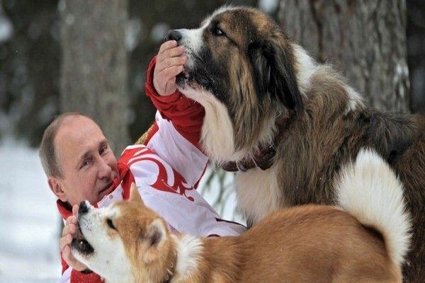 Мы против жестокости -Путин одобряет идею об ужесточении наказания за живодерство