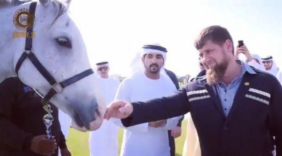 Наследный принц Дубая подарил Рамзану Кадырову самую выносливую лошадь в мире