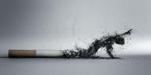 Табак – это зло