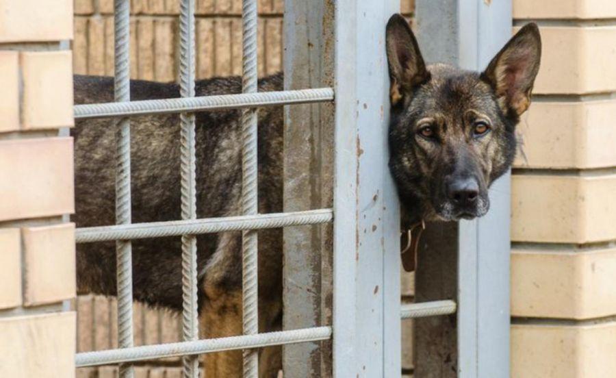 В городах ЧМ-2018 появятся приюты для собак