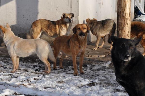 Бродячие собаки: причины нападений и способы защиты