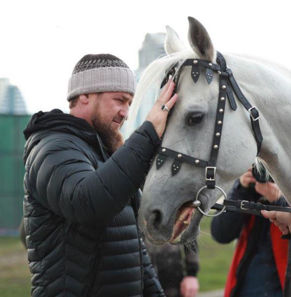 Р. Кадыров: «Любите лошадей, они этого достойны» (+видео)