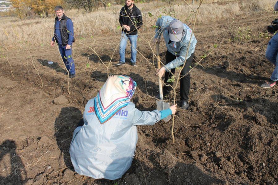 Активисты ОНФ Чечни приняли участие вэкологической акции «Живи, лес!»