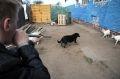 В Дагестане борются с массовым отстрелом бездомных собак