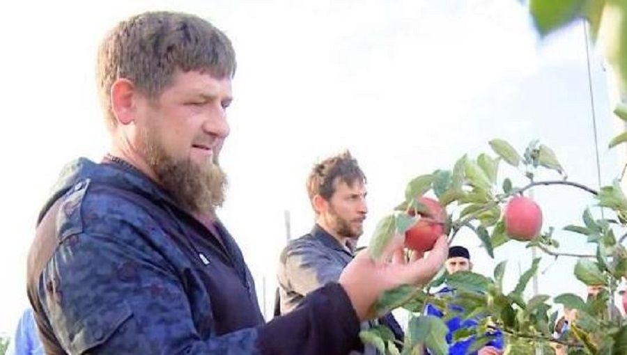 Глава Чечни оценил урожай фирмы «Фруттис групп»