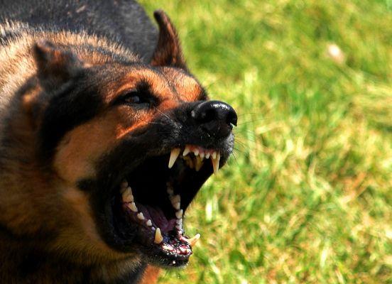 В Дагестане бродячие собаки растерзали девятилетнюю девочку