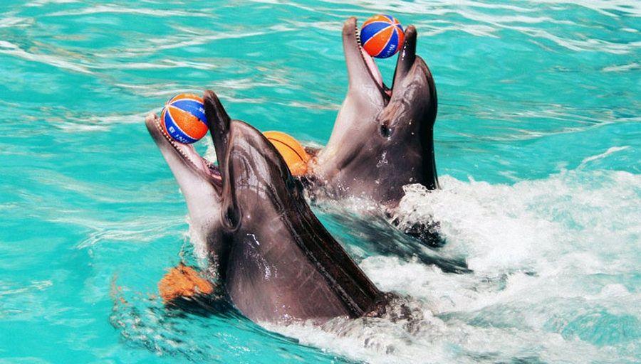 В Грозном строится современный дельфинарий