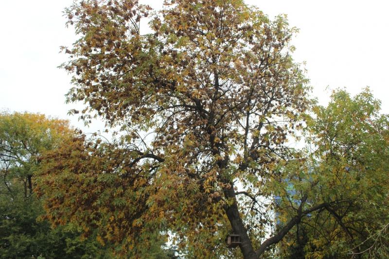 Осень в  Грозном