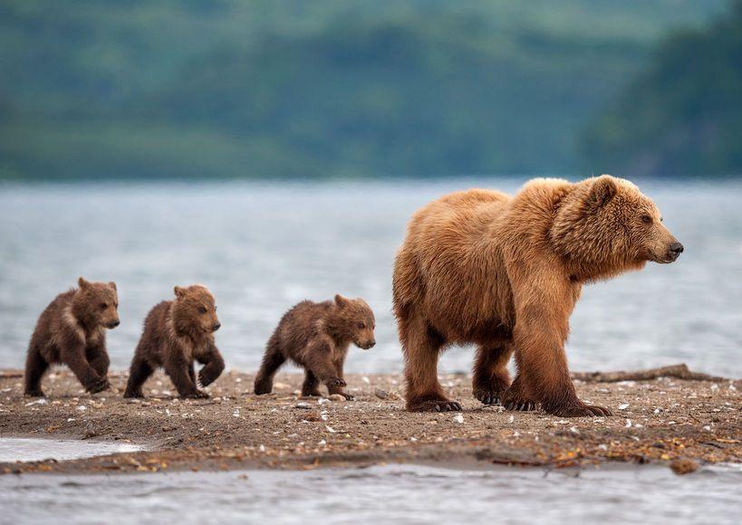 Смотреть Россию назвали самой дикой страной в мире видео
