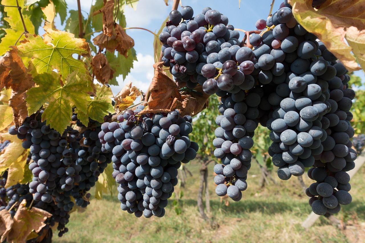 ЧЕЧНЯ. Чечня и Сербия рассматривают возможности сотрудничества в сфере садоводства и виноградарства